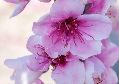 foto-floracion-05