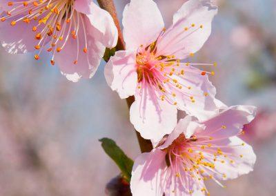 foto-floracion-10