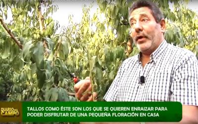 El Grupo Operativo Flor de Melocotón, en un especial de Diario de Campo