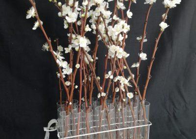 Flor de albaricoquero