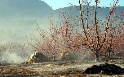 La Región de Murcia prohíbe las quemas agrícolas mientras dure el estado de alarma